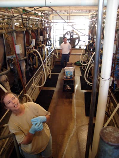 Where Does Milk Come From? A Tour of Shatto Dairy in Kansas City: gallery image 12