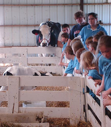 Where Does Milk Come From? A Tour of Shatto Dairy in Kansas City: gallery image 17