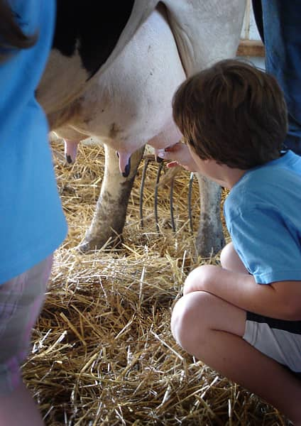 Where Does Milk Come From? A Tour of Shatto Dairy in Kansas City: gallery image 21