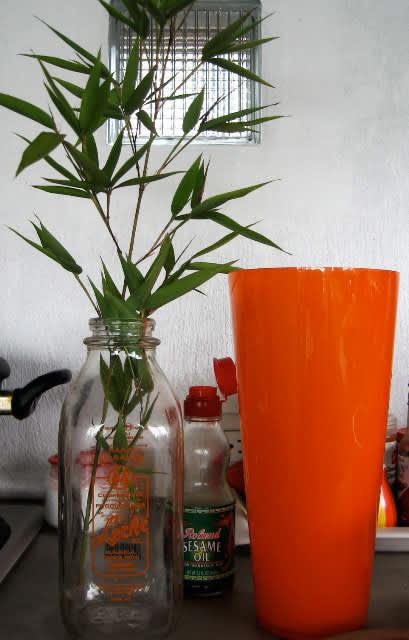 Ten Things I Love: Priscilla's Costa Rica Kitchen: gallery image 4