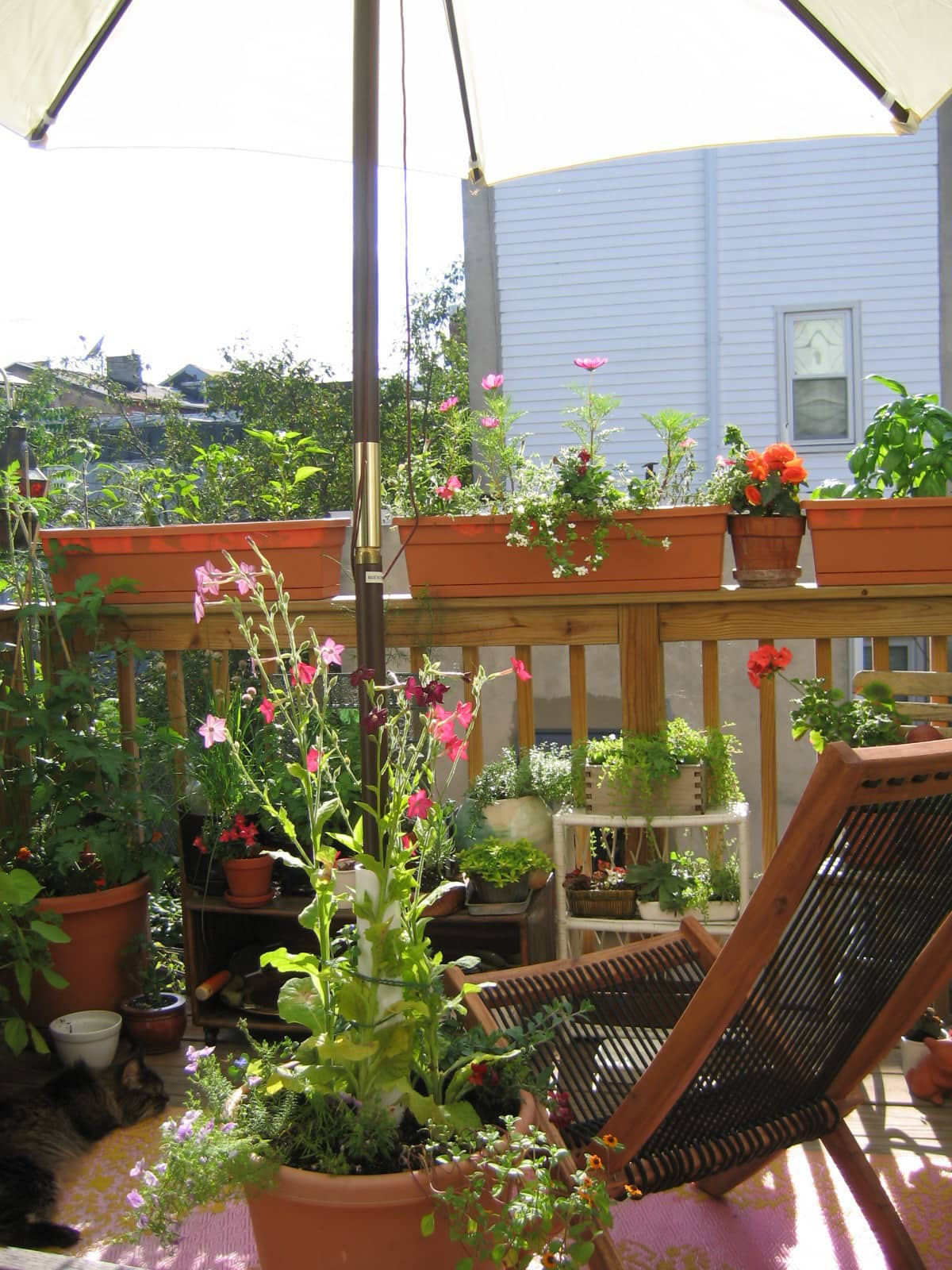 My Great Outdoors: Casi's Lush Garden and Dinner Deck: gallery image 4