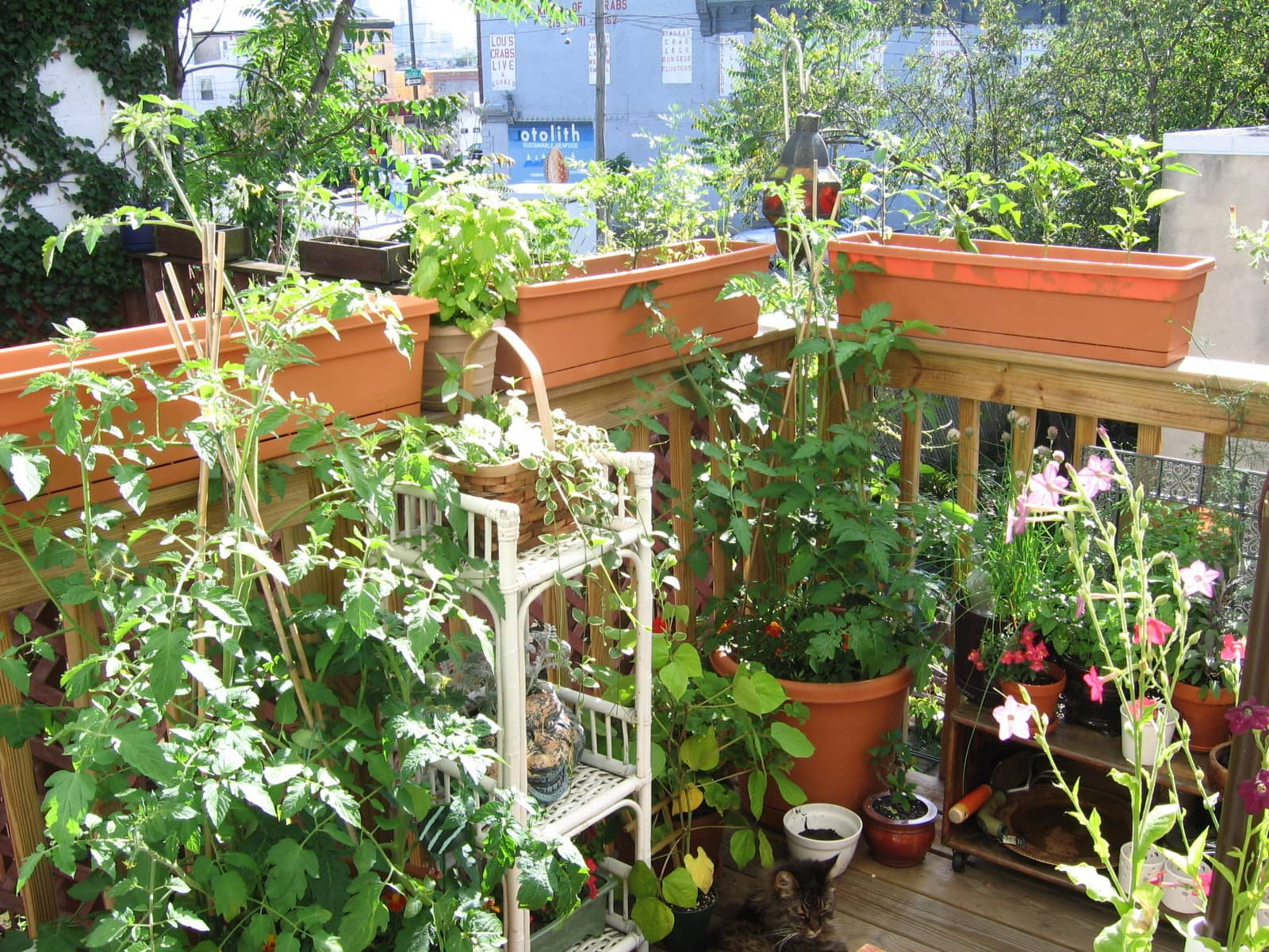 My Great Outdoors: Casi's Lush Garden and Dinner Deck: gallery image 3