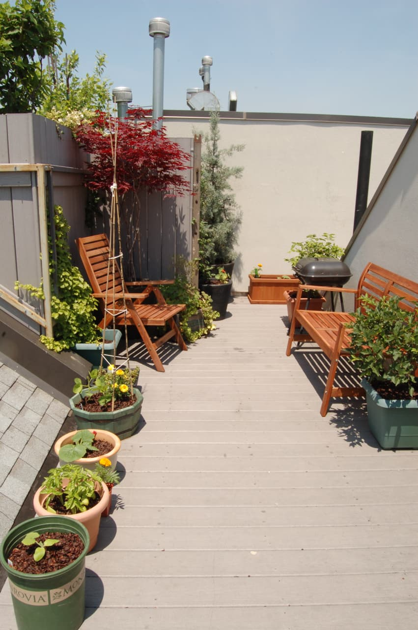 My Great Outdoors: Maria's Rooftop Kitchen Garden: gallery image 3