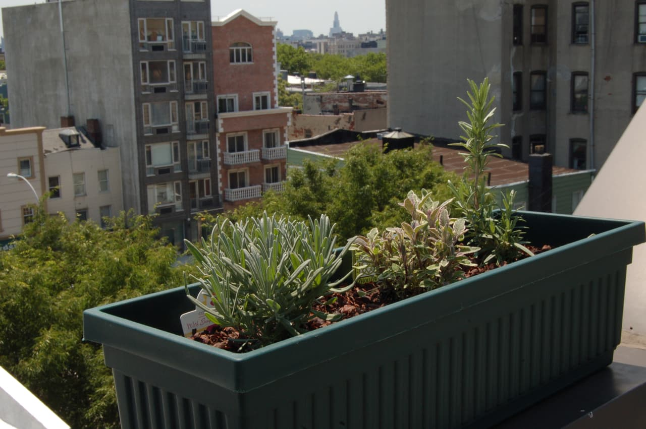 My Great Outdoors: Maria's Rooftop Kitchen Garden: gallery image 4