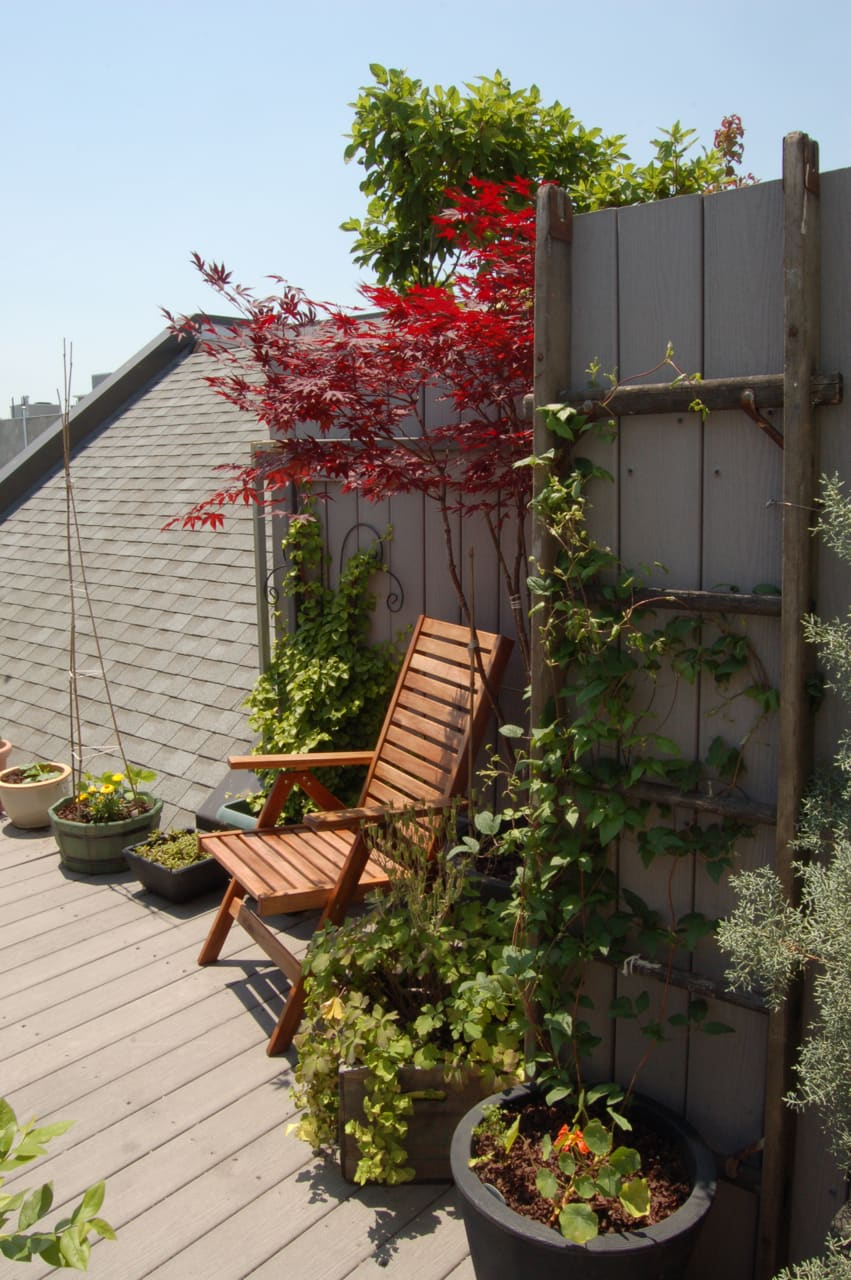 My Great Outdoors: Maria's Rooftop Kitchen Garden: gallery image 1