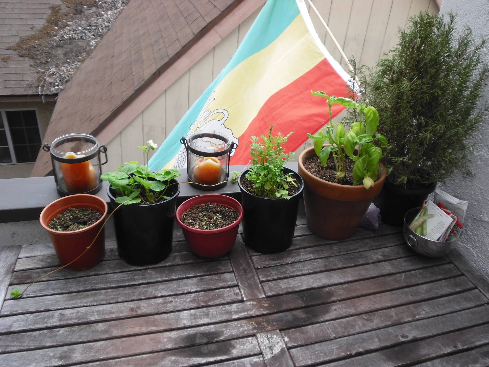 My Great Outdoors: Jennifer's Edible Container Garden: gallery image 2