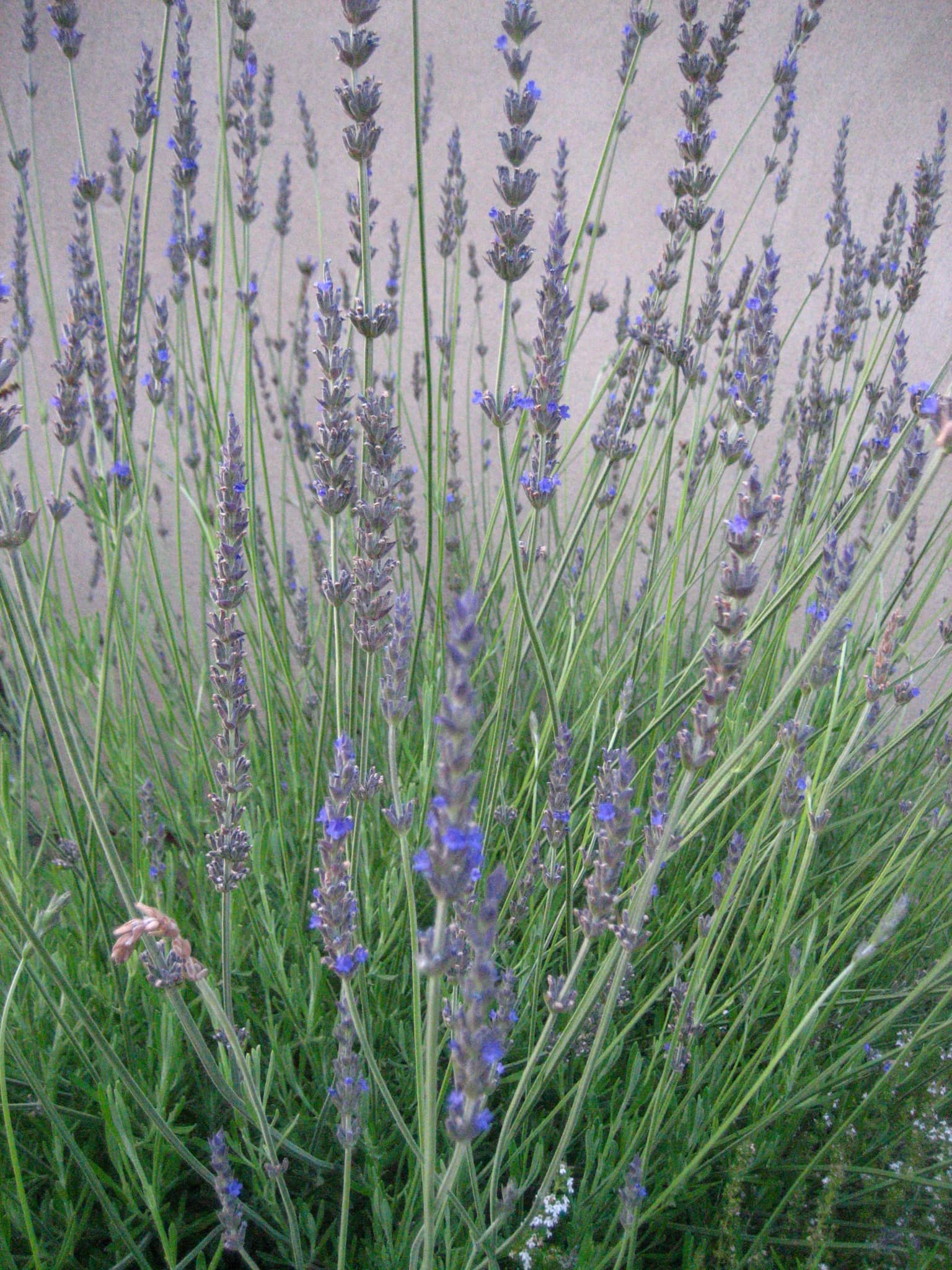 My Great Outdoors: April's Aromatic Herb Beds: gallery image 4