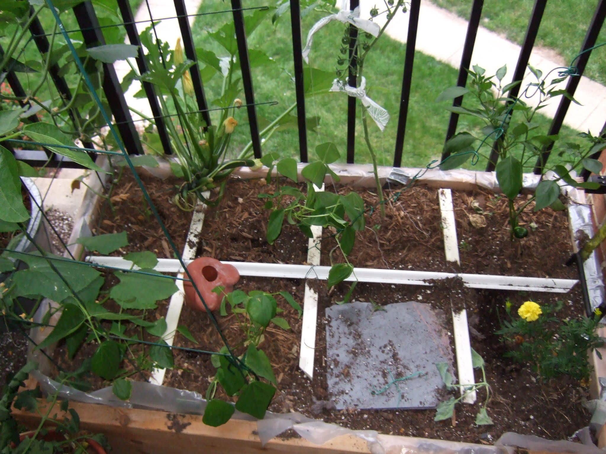 My Great Outdoors: Melissa's Garden Challenge: gallery image 5