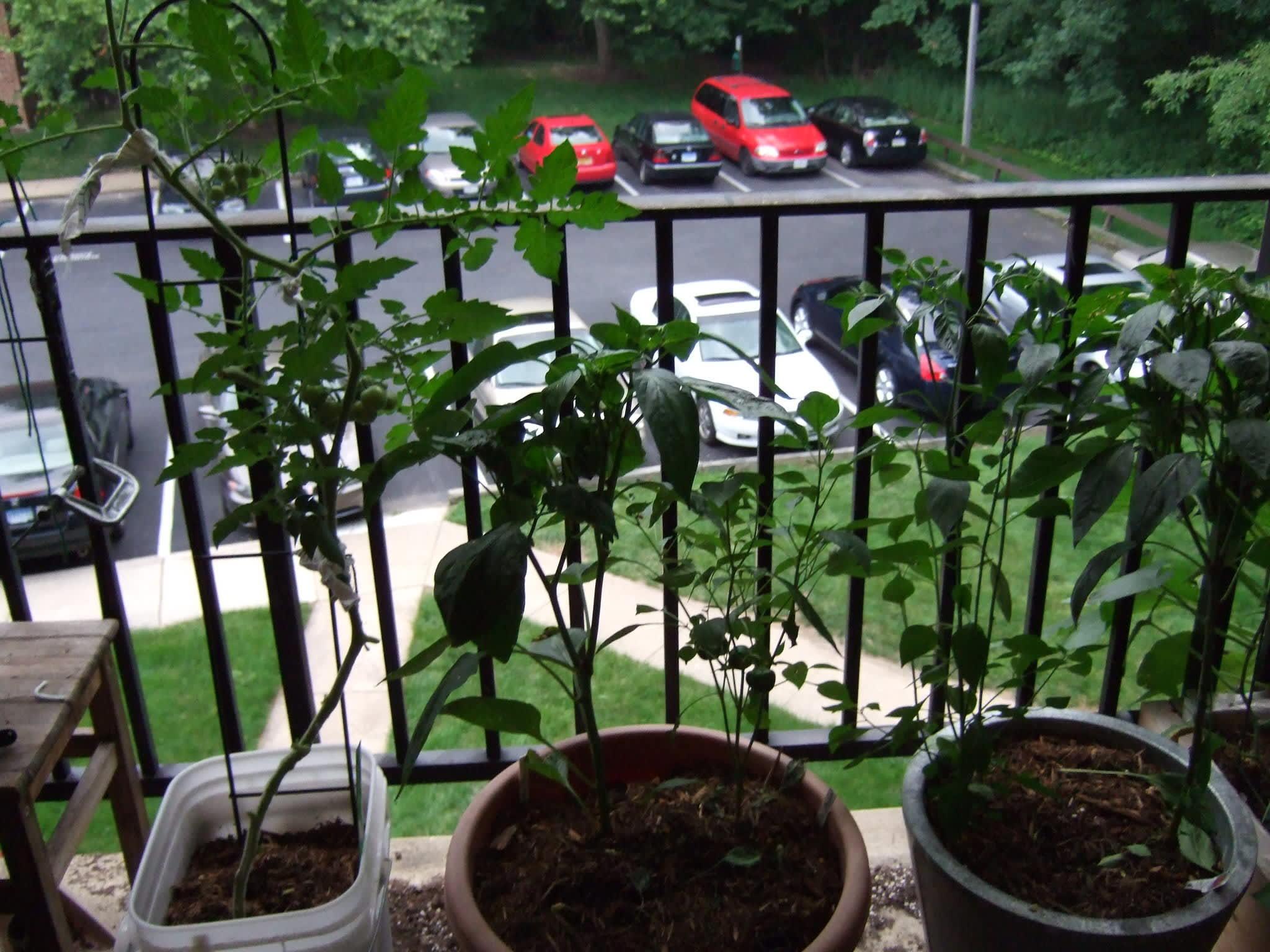 My Great Outdoors: Melissa's Garden Challenge: gallery image 2