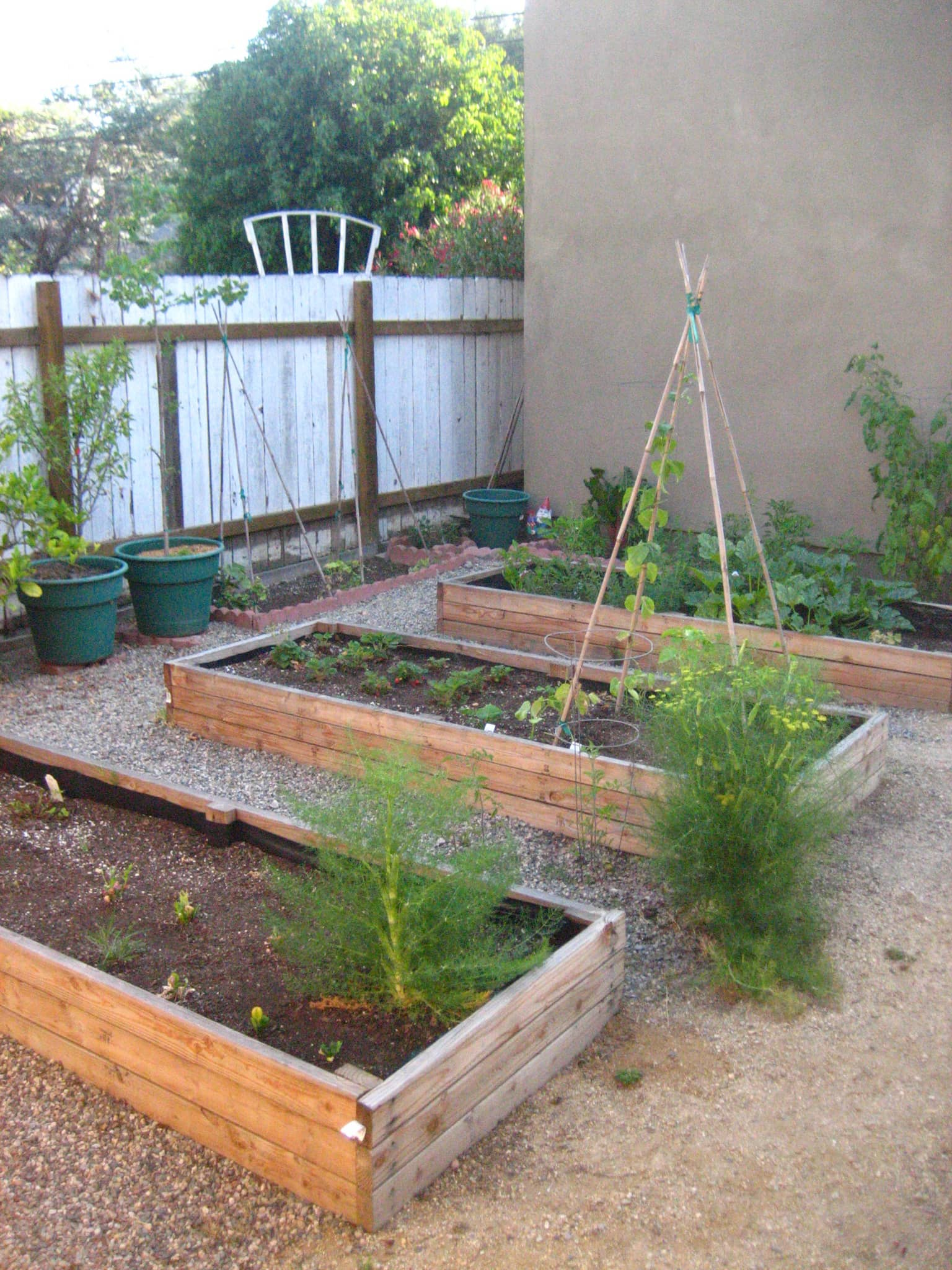 My Great Outdoors: April's Aromatic Herb Beds: gallery image 1