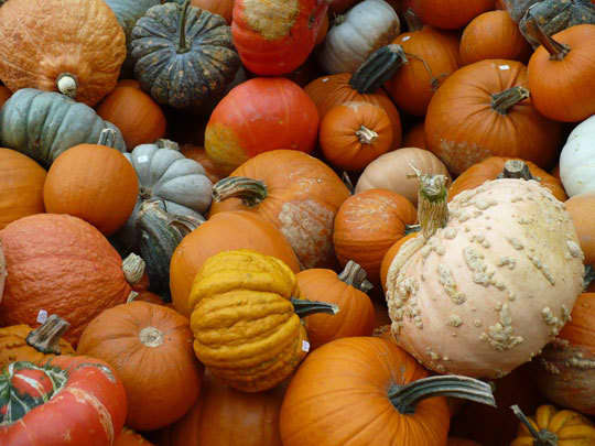 Midwest Harvest at the Farmers' MarketDane County, Wisconsin: gallery image 2