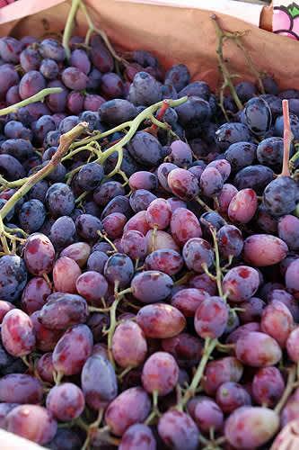 A Purple Theme at the San Rafael Farmer's Market: gallery image 1