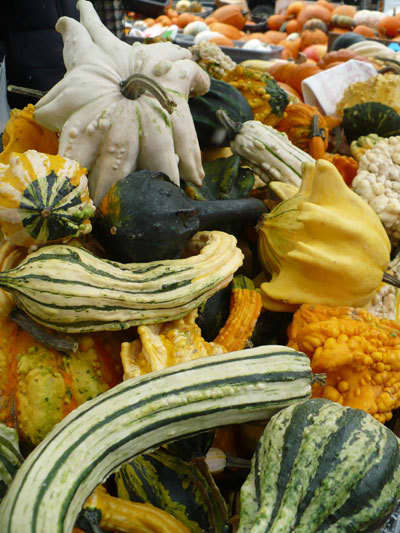 Midwest Harvest at the Farmers' MarketDane County, Wisconsin: gallery image 8