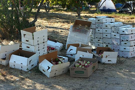 Apple Cider Campout In Sonoma: gallery image 3