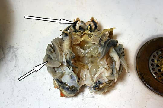How To: Cook And Clean Dungeness Crab: gallery image 6