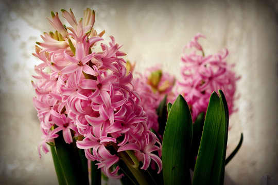 Beautify: 7 Spring Flowers for the Kitchen: gallery image 3