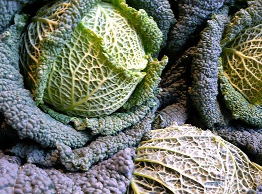 Know Your Cabbages! Green, Red, Savoy, Napa, and More: gallery image 4