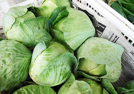 Know Your Cabbages! Green, Red, Savoy, Napa, and More: gallery image 1
