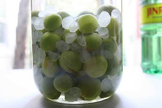 How To Make Umeshu (Japanese Plum Liqueur): gallery image 1