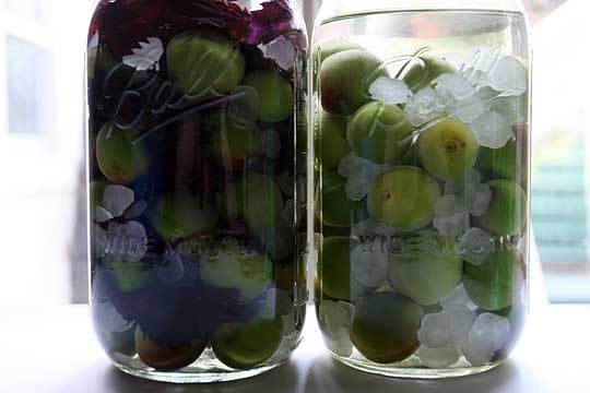 How To Make Umeshu (Japanese Plum Liqueur): gallery image 3