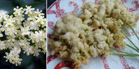 A Roundup Of Edible Flowers: gallery image 19