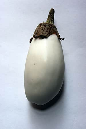 A Roundup Of Eggplant: gallery image 8