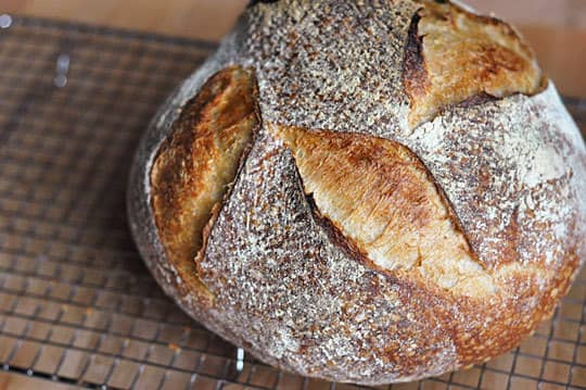 Tartine Bread: Basic Country Bread Recipe Reviews: gallery image 1
