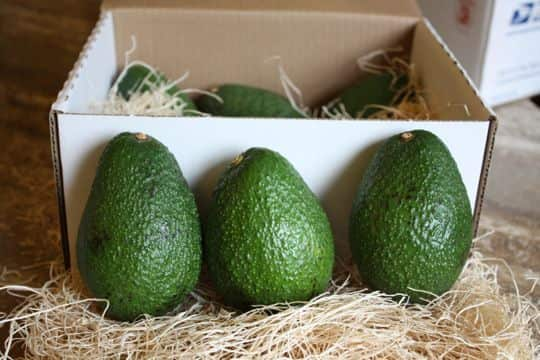 Avocados by Mail! California Avocados Direct Delivers: gallery image 1