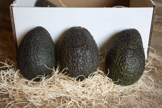 Avocados by Mail! California Avocados Direct Delivers: gallery image 6