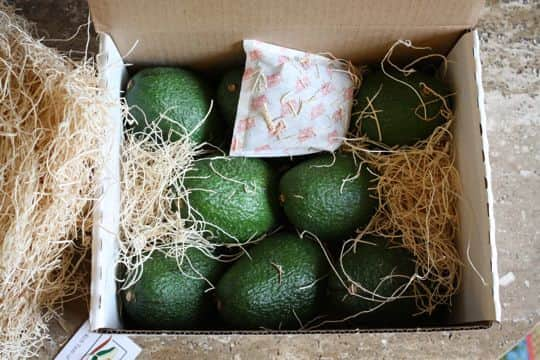 Avocados by Mail! California Avocados Direct Delivers: gallery image 4