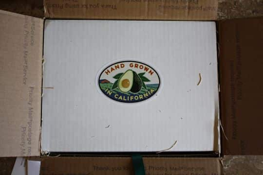 Avocados by Mail! California Avocados Direct Delivers: gallery image 2