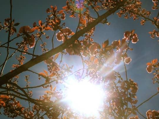 10 Meditations for Spring