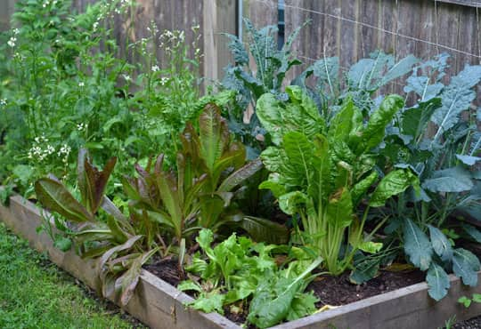 What's Growing in Your Garden This Summer?: gallery image 4