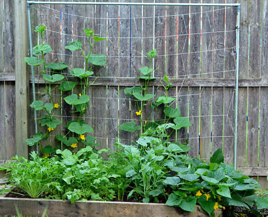 What's Growing in Your Garden This Summer?: gallery image 2