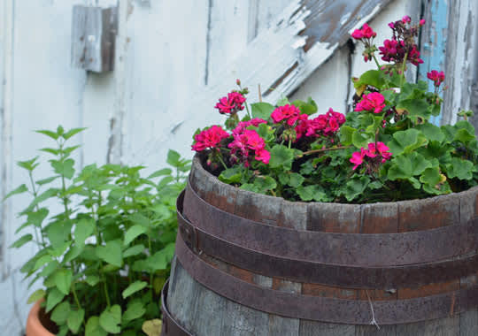 What's Growing in Your Garden This Summer?: gallery image 5