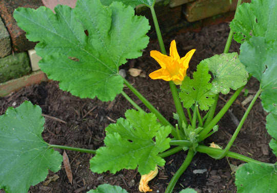 What's Growing in Your Garden This Summer?: gallery image 1