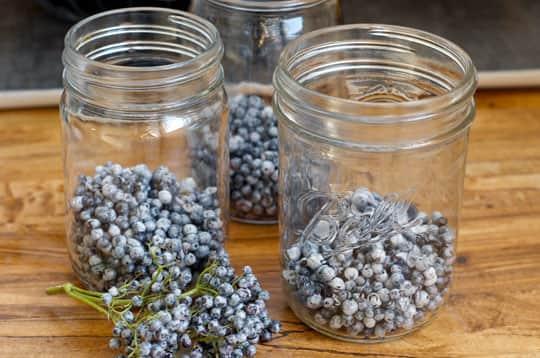 Drink Recipe: Elderberry Shrub: gallery image 3