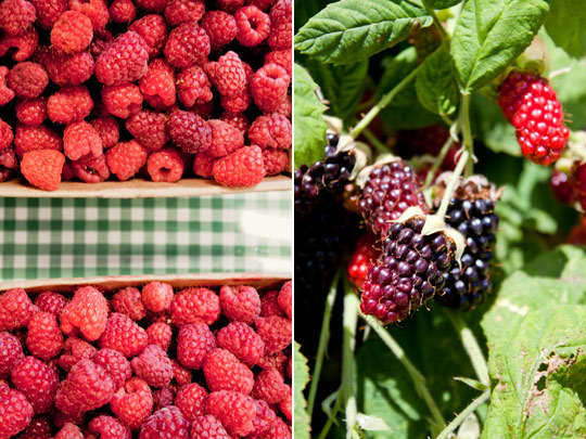 Oregon Fruit: Berry Farm & Cannery Tour: gallery image 5