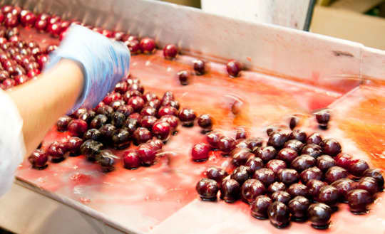 Oregon Fruit: Berry Farm & Cannery Tour: gallery image 10