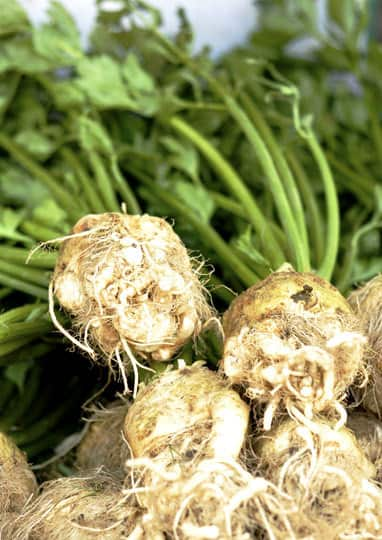 A Guide to Selecting the Best Produce: Vegetables: gallery image 12