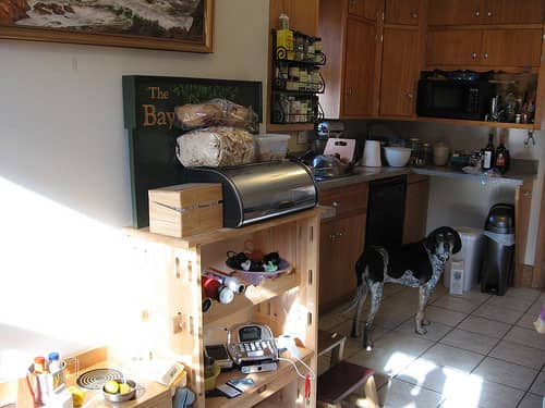 Rachel & Alex's Urban Homestead with Hounds, Chicken, & Handmade Kitchen: gallery image 10