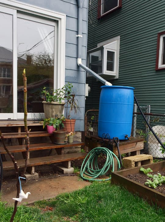 Rachel & Alex's Urban Homestead with Hounds, Chicken, & Handmade Kitchen: gallery image 6