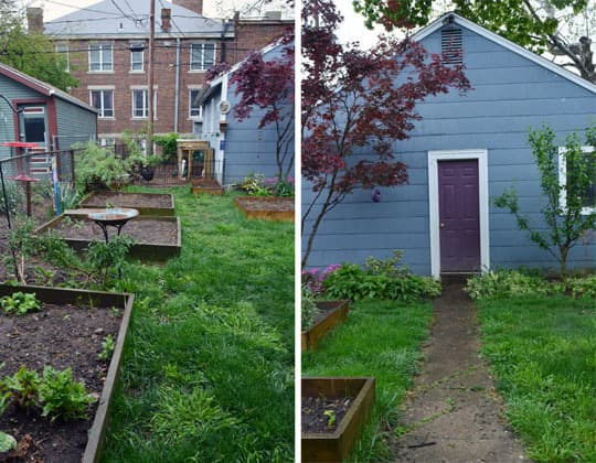 Rachel & Alex's Urban Homestead with Hounds, Chicken, & Handmade Kitchen: gallery image 7
