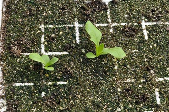 Spring Seeding: March at Quail Hill Farm: gallery image 17