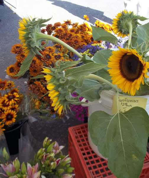 The Downtown Lawrence Farmers' Market: gallery image 3