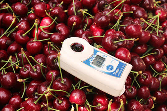 Perfect Cherries: Their Journey From the Farm (and 3 Tips for Buying Them): gallery image 1