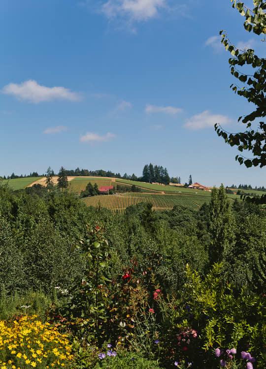 A Visit to Oregon Olive Mill: Heritage Olive Oil From Dayton, Oregon: gallery image 22