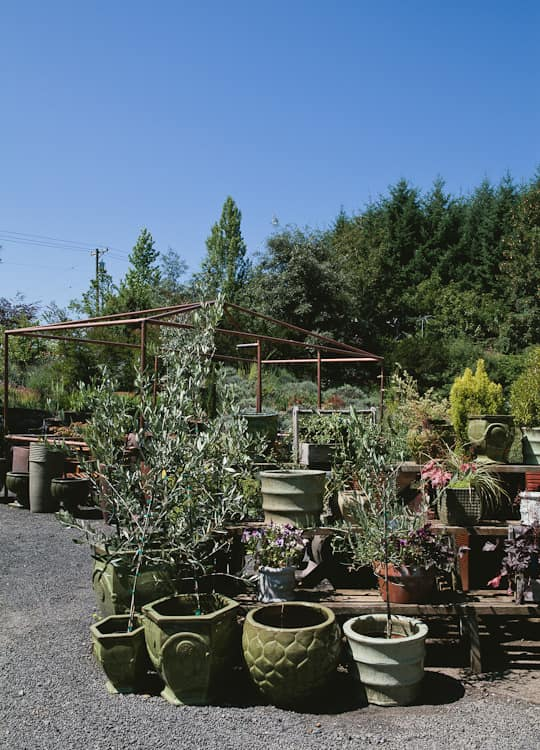 A Visit to Oregon Olive Mill: Heritage Olive Oil From Dayton, Oregon: gallery image 21