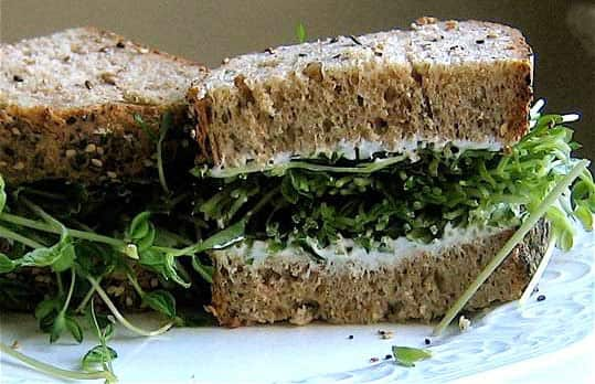 Fresh Sandwich Idea: Grow Sprouts!: gallery image 2