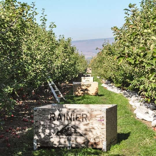 From Orchard to Market: Come Along on an Apple Harvest!: gallery image 5